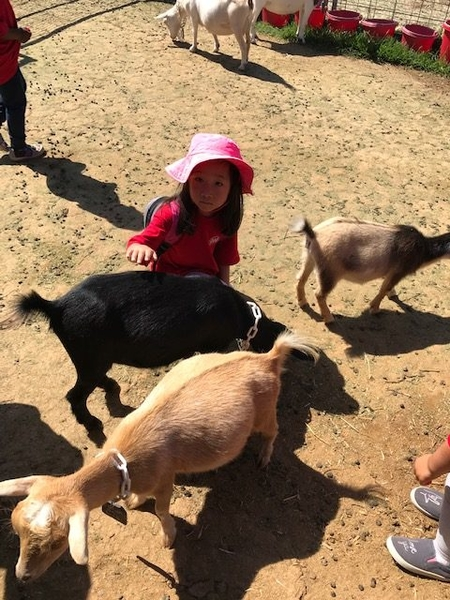 Field Trip to Amy's Farm